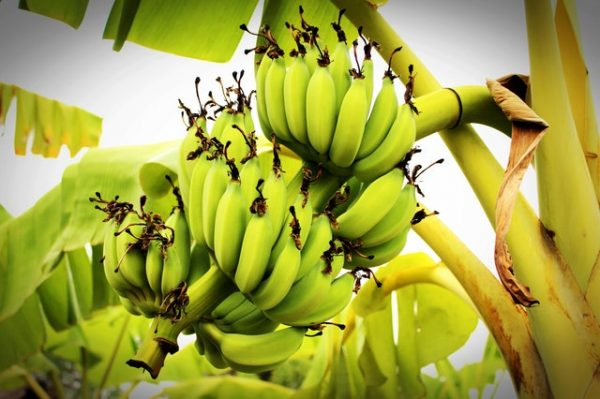 Banana as pre-workout snack